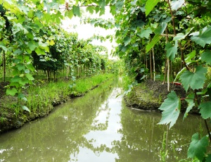 The floating vineyards of siam winery
