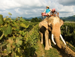 Taking a Thailand wine tour through the Hua Hin Hills vineyard by Elephant